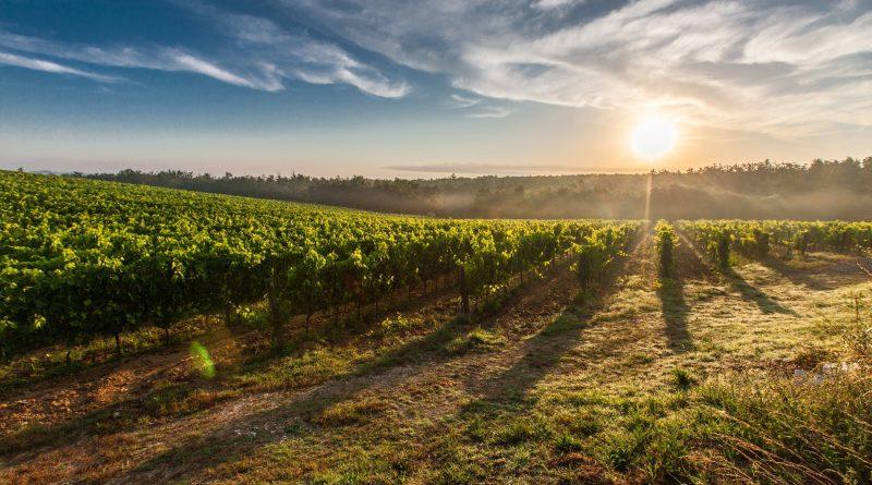 Tout savoir sur le label HVE en viticulture