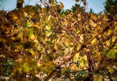 Zoom sur les vins du terroir alsacien